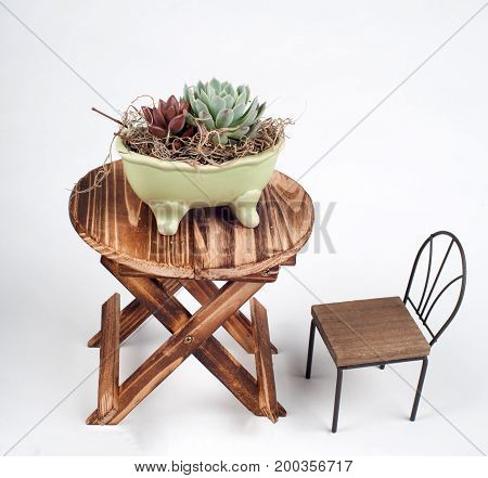 counter top piece of succulent plants in a cute planter , photo with isolated white background