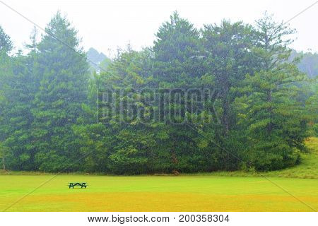 Park with by a manicured green lawn including a lone picnic bench surrounded by a pine forest taken during a rain storm taken in Kauai, HI