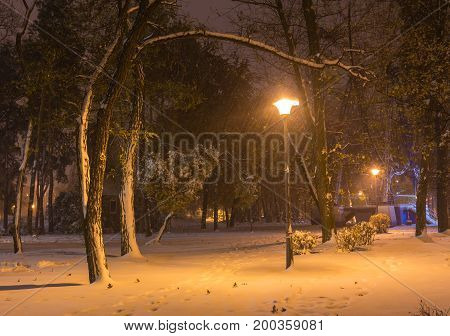 Winter Night Landscape- Bench Under Trees And Shining Street Lights Falling Snowflakes.