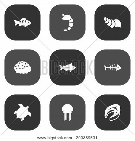 Collection Of Medusa, Roe, Tunny And Other Elements.  Set Of 9 Seafood Icons Set.