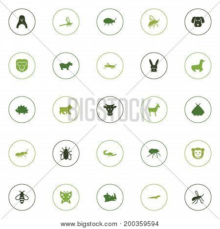 Collection Of Bumblebee, Housefly, Porcupine And Other Elements.  Set Of 25 Animal Icons Set.