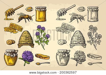 Honey set. Jars of honey bee hive clover spoon cracker bread and honeycomb. Vector vintage color engraved illustration on beige background