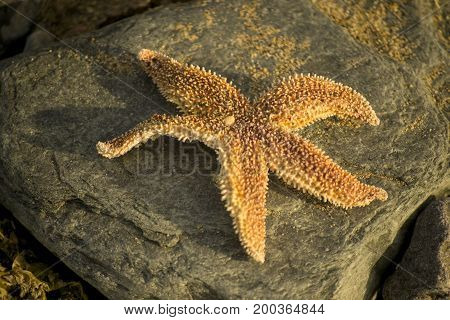 You are a sea star, get rid of