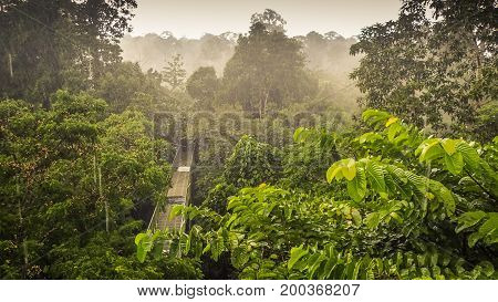 Canopy Walk In Sepilok, Sabah, the Malaysian part of Borneo. An early morning with fog. Rainforest trees. Picture taken from the high tower.