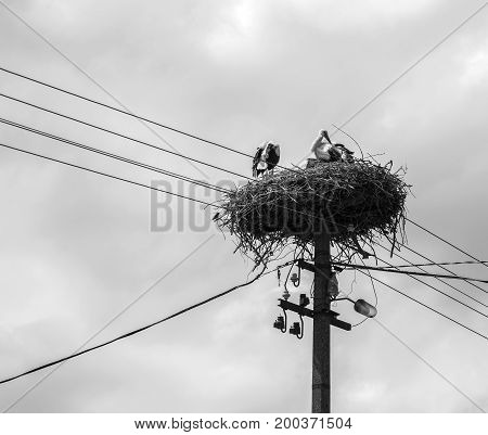 Two storks in a nest on a pole.