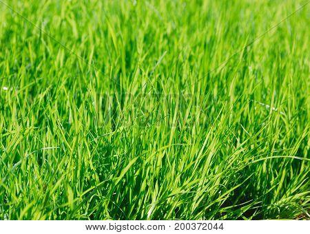 close up on green grass under sunlight