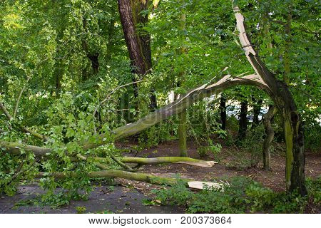 Damaged Tree After Storm And Wind In Park