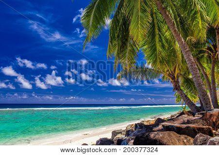 Palm trees and rocks on the vibrant beach, tropical Cook Islands, Rarotonga