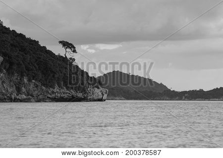Black and White Small tree over high hill seacoast skyline natural landscape background