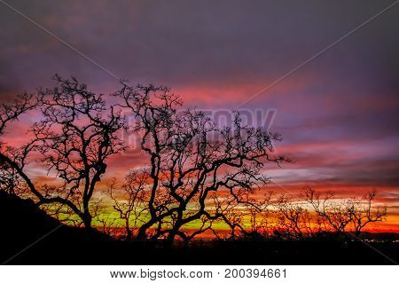 Fire Sky Tree silhouette. Fremont Peak State Park, San Benito County and Monterey County, California, USA.