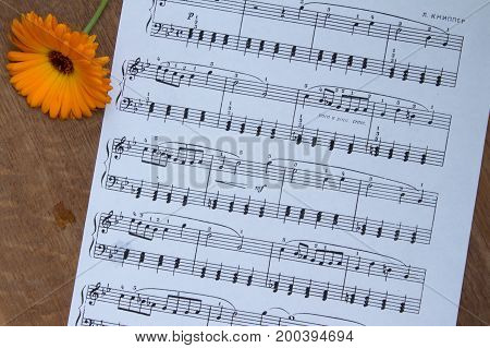 Orange Flower On Wood Table. Background Of Music Notes. Top View.