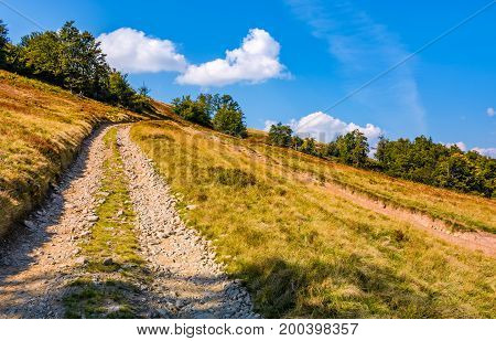Mountain Road Through Hillside With Beech Forest