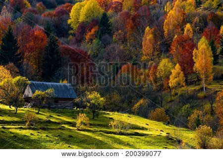 Abandoned Wooden House In Autumn Forest