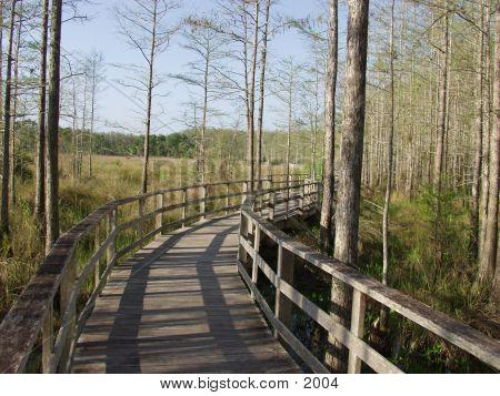 Florida Cypress Preserve 2325