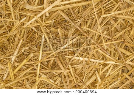 Straw Background texture close up showing the individual pieces of straw