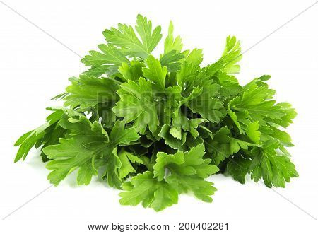 parsley bunch isolated on white background, tasty, natura, top view