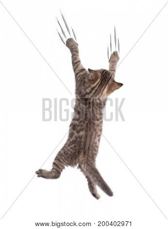 Funny cat clamber isolated
