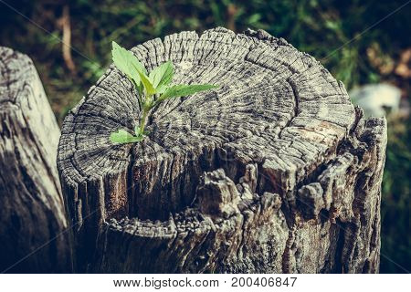 Strong and development as business and success concept small tree growing up from old trunk