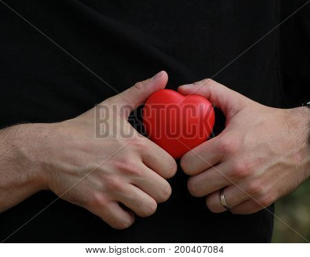 Man in black t- shirt holds red heart in palms/ White man in black t- shirt holds red heart in palms.