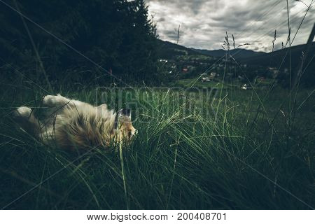 beautiful landscape of the mountians with dramatic clouds dog