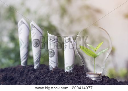 small tree growth in light bulb and dollars bill growth up with soil planting money saving and investment concept as invest about business and success in finance capital banking and economy