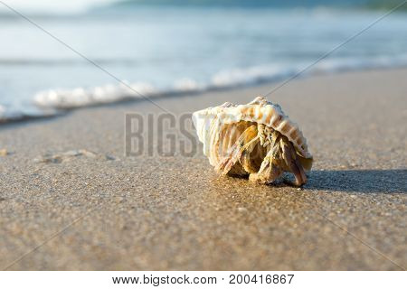 Hermit crab walking on tropical beach in bright morning.