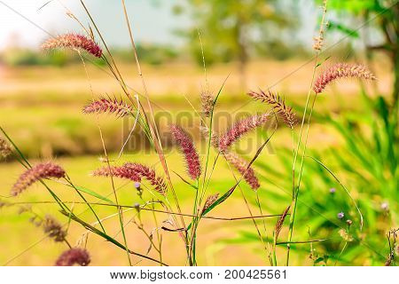 nature flower plants landscape using as a background or wallpaper