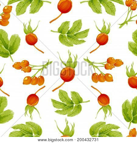 Seamless autumn pattern with berries and leaves rosehip plants. Vector illustration. On white