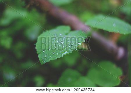 Dew Drops On A Sheet