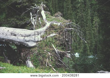 The Roots Of A Fallen Tree