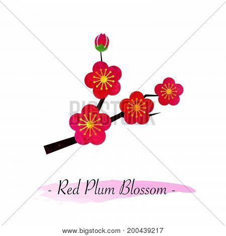 Colorful Watercolor Texture Vector Botanic Garden Flower Red Plum Blossom