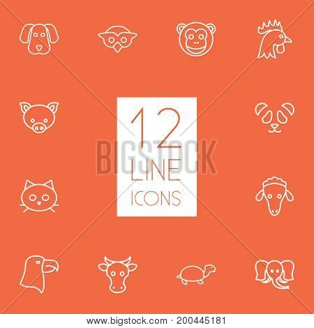 Collection Of Cock, Sheep, Cat And Other Elements.  Set Of 12 Zoo Outline Icons Set.