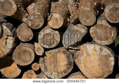 Abstract photo of a pile of natural wooden logs background top view.