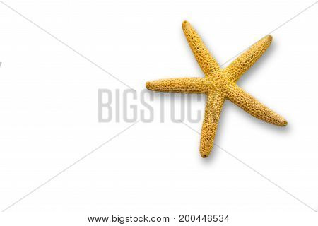 yellow starfish isolated on white background closeup.