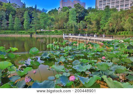 Cuhk Reflection Of The Lake Shatin
