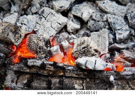 Wooden Embers Beautifully Glowing. Charcoal Embers Ready For Barbecue