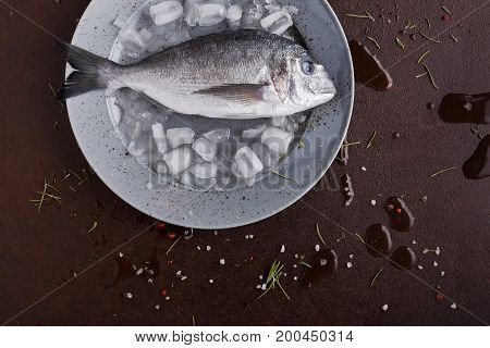 Fresh dorado fish in ice on gray round plate at black background. Organic cooking ingredients for seafood restaurant. Top view, copy space