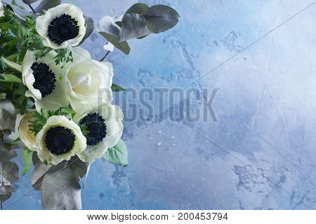 Fresh blooming Anemones flowers on gray background with copy space