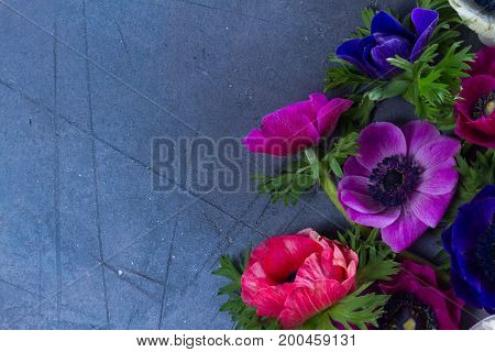 Blooming Anemones flowers with copy space on gray stone textured background