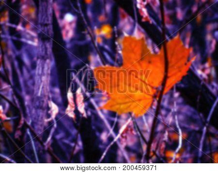 Orange maple leaf in dark forest; blurred background