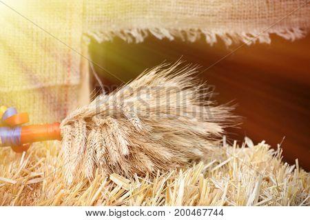 Sheaf Of Dried Ears Of Wheat