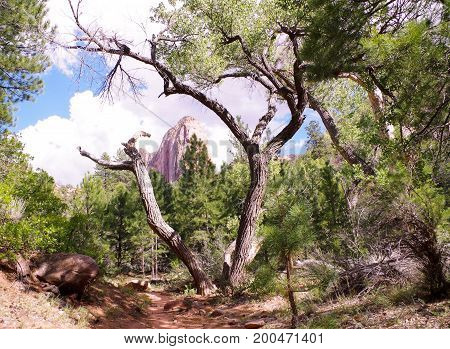 Picturesque view of mountain framed by tree on Taylor Creek Hiking Trail, Kolob Canyons, Zion National Park, Utah, USA