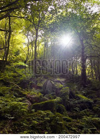 woodland in a valley with sunlight shining though the trees with rocks and boulders covered in ferns and moss taken in otley chevin in west yorkshire