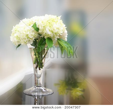 White Hydrengeas in Vase