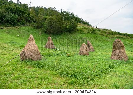 The old way to gather sheaves in the Carpathians, Ukraine