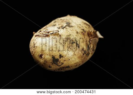 Young potatoes on a black background potatoes in pieces of land space for text