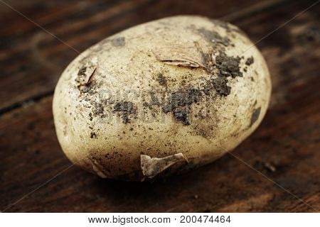 One young potato on a wooden background close-up space for text