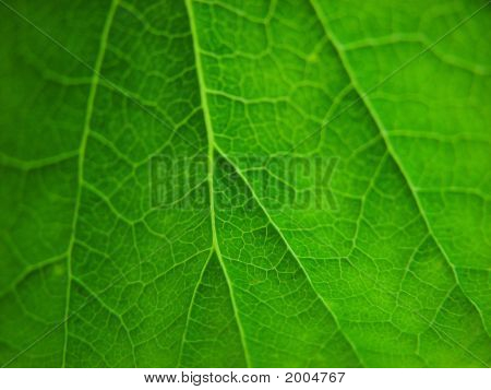 Green Leaves Detail