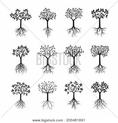 Set of black Trees with Roots. Vector Illustration.