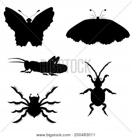 Set of silhouettes of insects. vector illustration. Drawing by hand